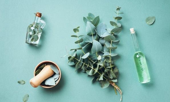 Không chỉ giúp trị đau đầu, giảm đau cơ, tinh dầu khuynh diệp còn giúp trị ho và vô vàn công dụng khác