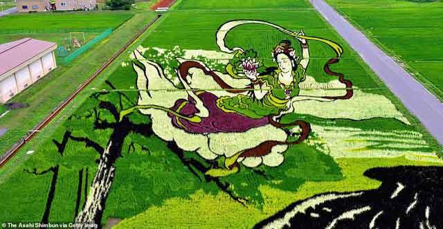 Những bức tranh đồng quê gây trầm trồ cho người xem ở Nhật Bản