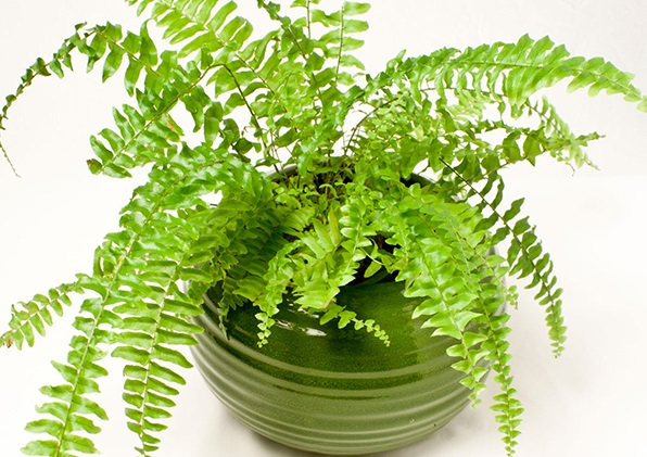 3 loại cây giúp không khí trong nhà trong lành hơn