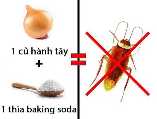 Cách xua đuổi côn trùng rời khỏi căn nhà bạn