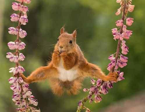 Những bức ảnh siêu hài hước về động vật