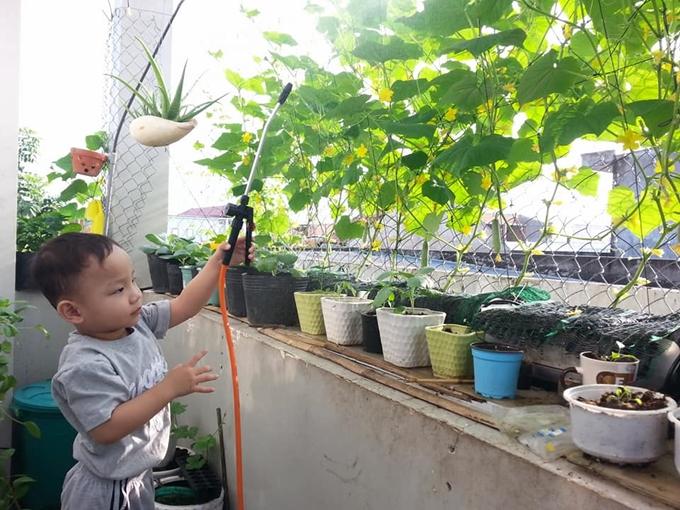 Cải tạo ban công nhỏ tí để trồng rau sạch cho con ăn dặm