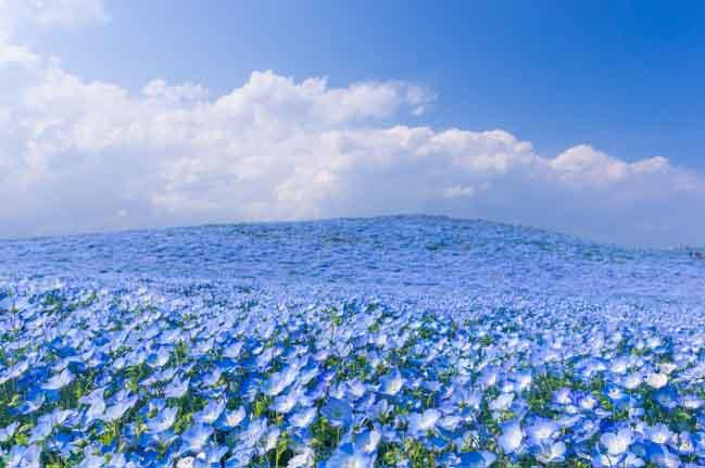 Châu Á có những nơi ngắm hoa đẹp như thế này