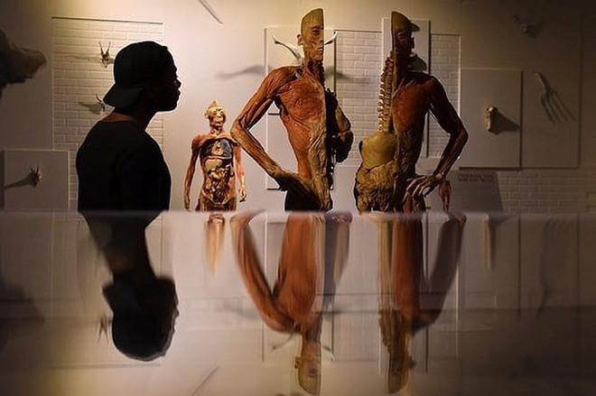 Hội Mỹ Thuật VN lên tiếng về triển lãm xác người nhựa