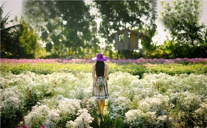 Chỉ cần đi Tiền Giang, đã say lòng bởi vườn hoa rực rỡ này