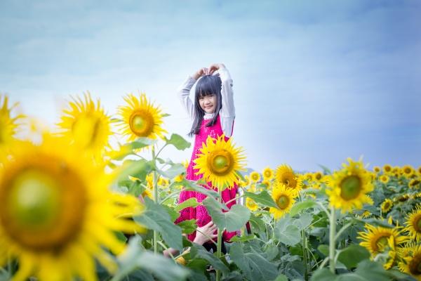 Giới trẻ tranh thủ check-in cánh đồng hoa hướng dương vào độ rực rỡ nhất
