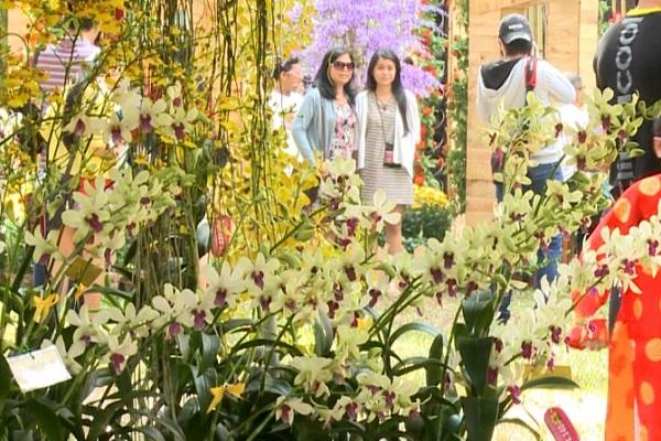 Festival hoa Lan lần đầu tiên sẽ diễn ra 5 ngày tại TP.HCM