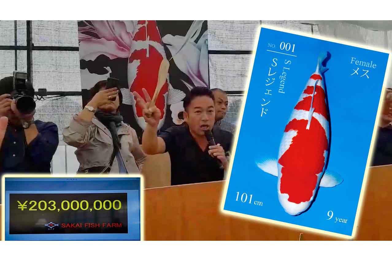 S Legend trở thành con cá sống đắt nhất thế giới với giá khoảng 42 tỷ đồng