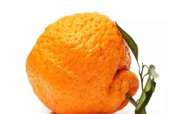 """45% thực phẩm toàn thế giới bị lãng phí vì hình dáng """"xấu xí"""""""