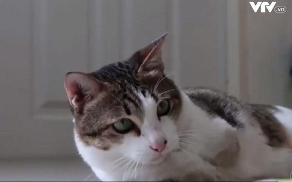 Cô mèo hai chân gây bão mạng