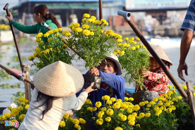 Quê hương là gì hở mẹ? Kỳ 42: Quê nội và mùa cúc vàng rực rỡ