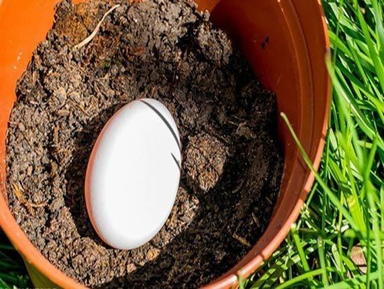 Trứng có thể thay thế phân bón cho cây