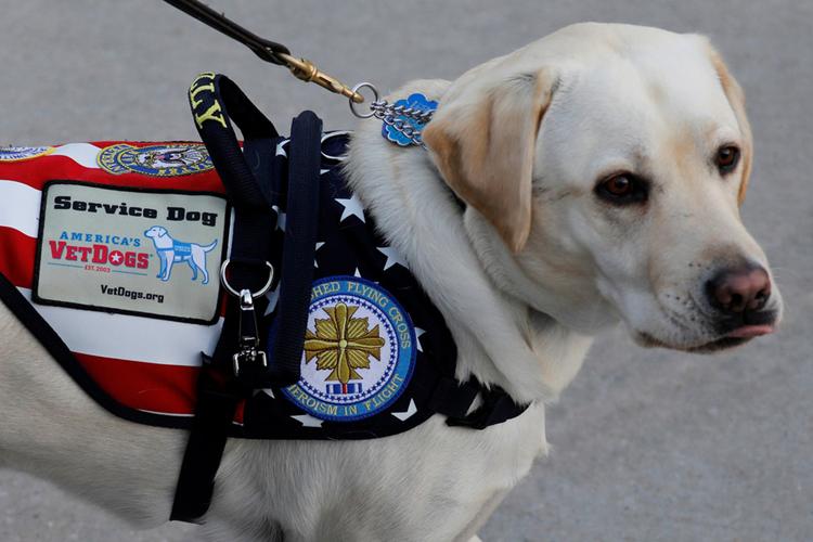 """Điều ít biết về chó Sully nổi tiếng của cố Tổng thống Bush """"cha"""""""