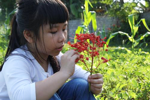 Bài văn của bé gái lớp 5 khiến dân mạng nổi sóng