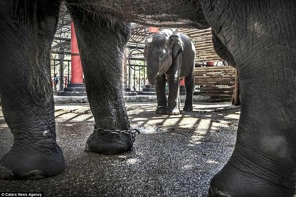 """Nghiệt ngã cảnh giam cầm những động vật """"sống chỉ để mua vui"""" ở Thái Lan"""