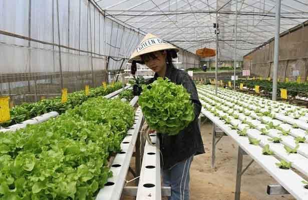 Mô hình quán cà phê kiêm vườn rau sạch thú vị ở Đà Lạt