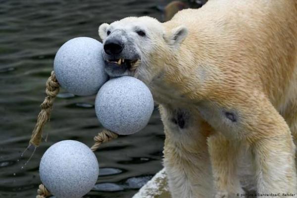 Vườn thú Đức lên kế hoạch 'xẻ thịt' động vật làm thức ăn nếu dịch COVID-19 kéo dài