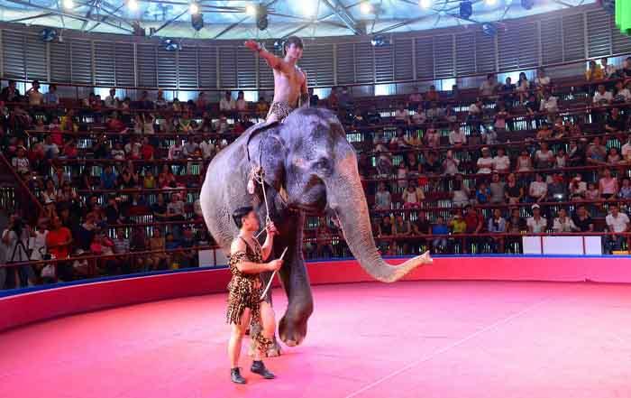 Kêu gọi dừng việc bắt động vật hoang dã biểu diễn xiếc