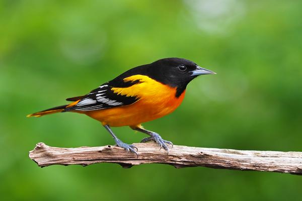 Kỳ lạ cách loài chim đối mặt với biến đổi khí hậu