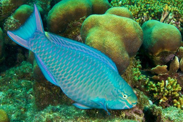 Hãy ngừng đánh bắt cá vẹt nếu muốn bảo tồn hệ sinh thái biển