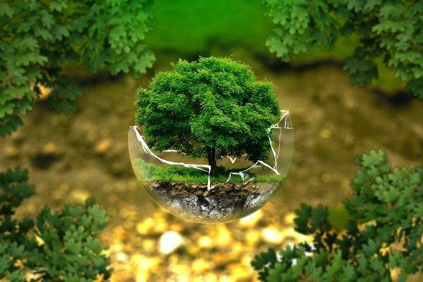 20 ý tưởng xanh thay đổi thế giới (phần 2)