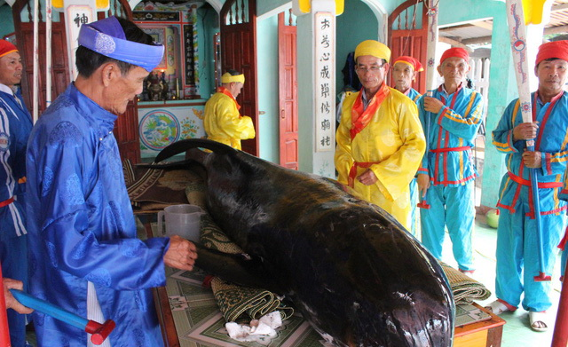 Cá voi dạt vào bờ, ngư dân Quảng Ngãi áo dài khăn đóng mai táng