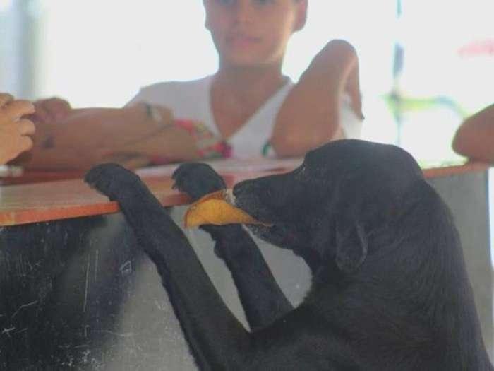 Chú chó thông minh mang lá cây đổi bánh mỗi ngày