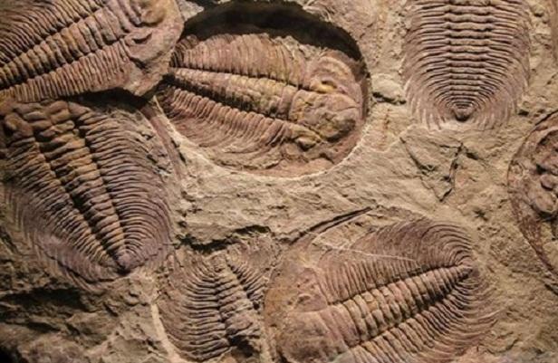 Có thể phải viết lại lịch sử tiến hóa của động vật trên Trái Đất
