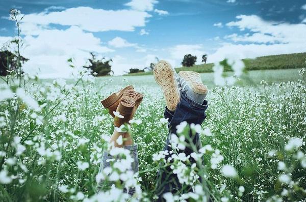 Đà Lạt xao xuyến những mùa hoa