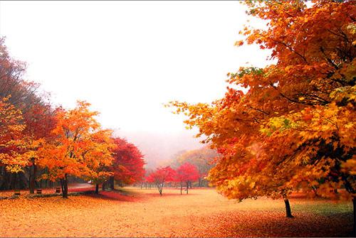 Mùa thu Hàn Quốc rực rỡ mỗi độ tháng 10