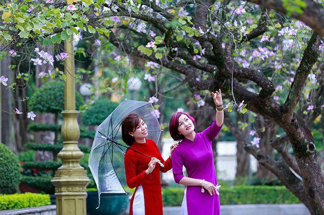 Lễ hội hoa ban sẽ tổ chức tại Bảo tàng Hà Nội
