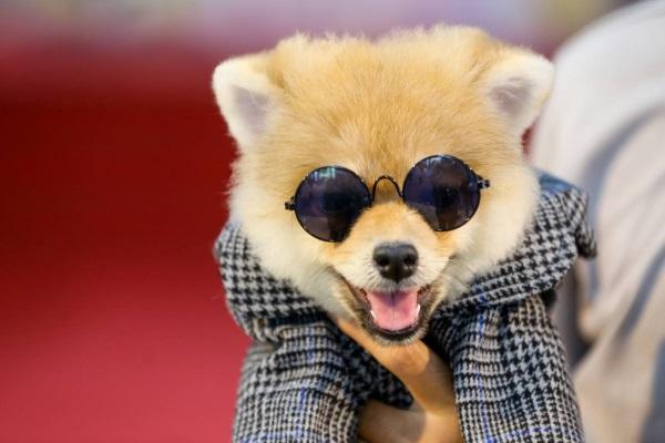 Ngày hội tranh tài cho hàng trăm cún cưng ở Sài Gòn
