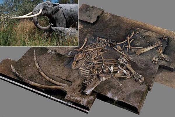 Khai quật bộ xương voi khổng lồ 300.000 năm tuổi