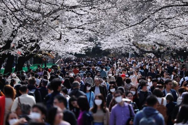 Hàng nghìn người đổ xô ngắm hoa anh đào giữa tâm dịch covid-19