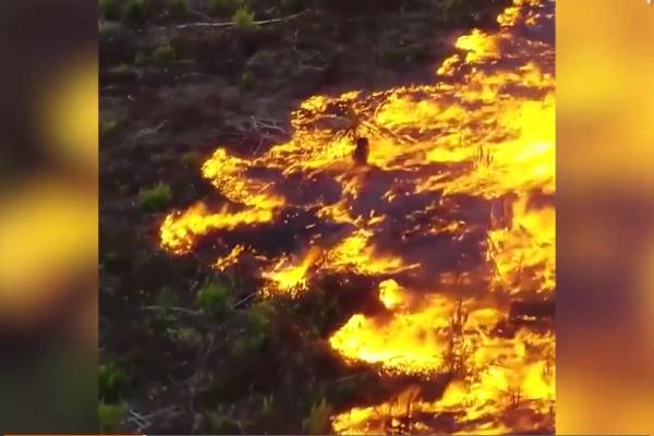 Khí độc do cháy rừng Amazon đang tăng cao, gây nguy hiểm cho sức khỏe