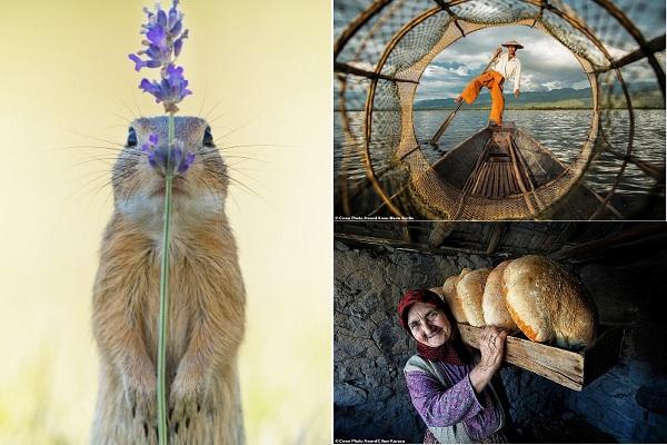 11 hình ảnh tuyệt đẹp thắng giải cuộc thi ảnh lớn nhất thế giới