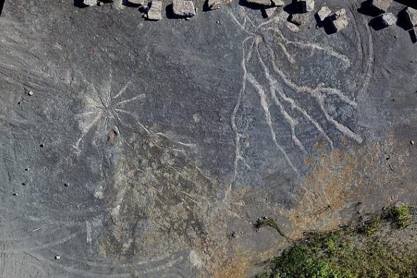 Khu rừng cổ nhất có trước khi khủng long xuất hiện