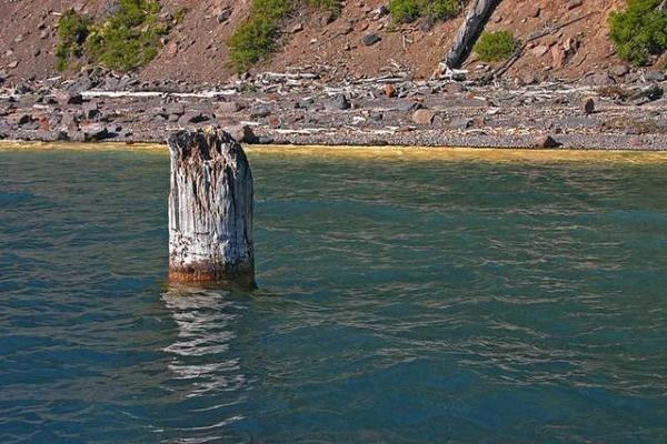 Kỳ lạ khúc gỗ trăm tuổi, thách thức mọi định luật vật lý