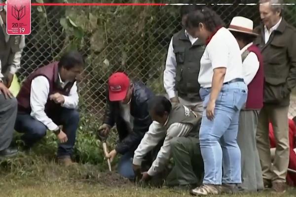 Peru trồng 1 triệu cây xanh để ngăn lở đất và cháy rừng