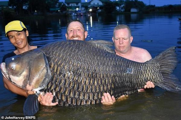 Du khách Anh câu được cá chép lớn nhất thế giới