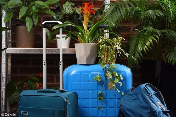 Gửi... cây khi đi du lịch