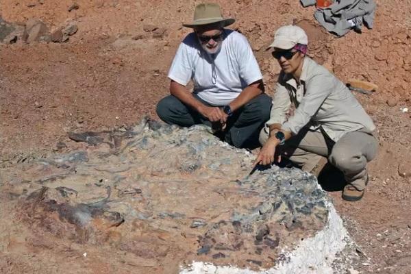 """""""Nghĩa địa"""" chứa hàng chục hóa thạch khủng long"""