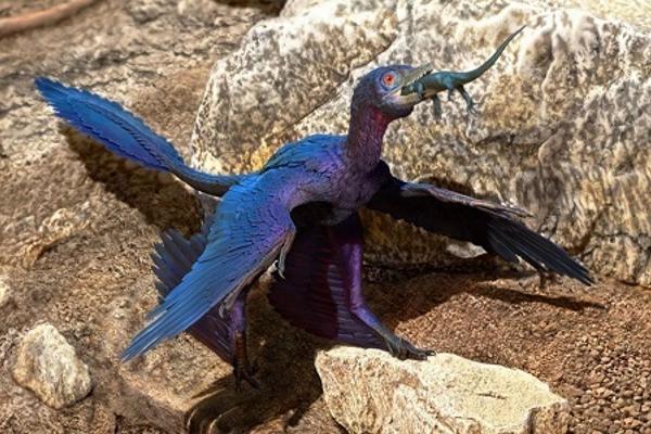 Hiếm gặp: Hóa thạch trong hóa thạch khủng long 4 cánh 125 triệu năm