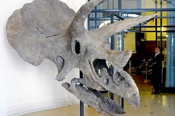 Phát hiện hóa thạch khủng long 68 triệu năm