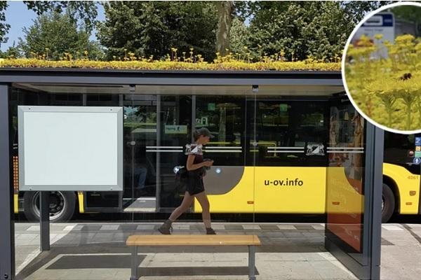 Trạm xe buýt 'xanh' thu hút ong ở Hà Lan