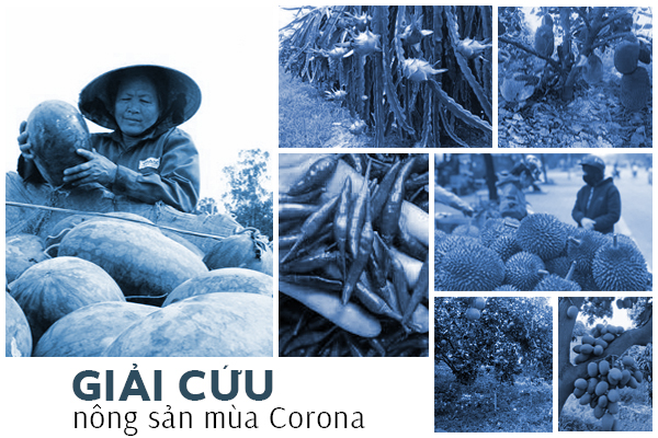 """""""Giải cứu"""" 7 nông sản vào mùa thu hoạch trước khi virus Corona được ngăn chặn"""