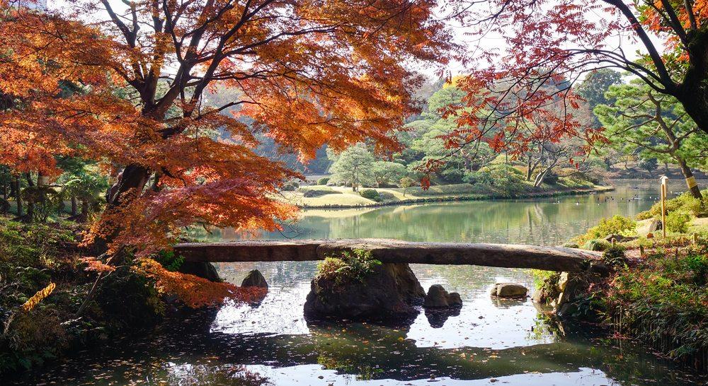 Quyến rũ mùa ngắm lá phong Nhật Bản